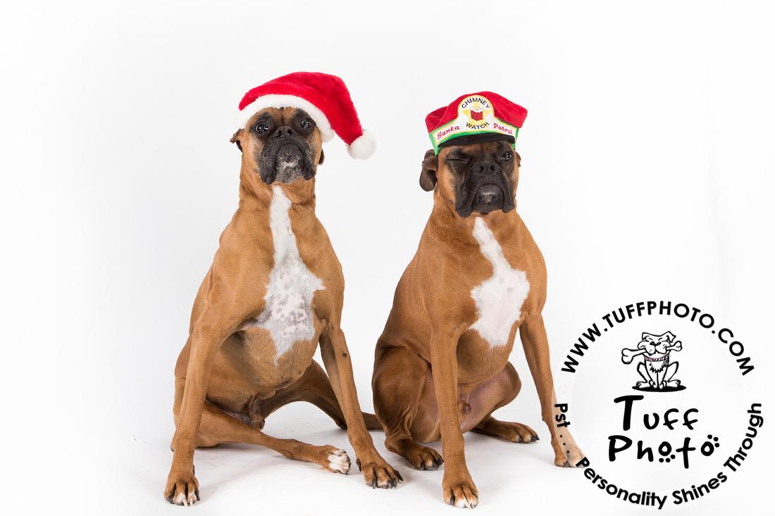 Pups Holiday-100