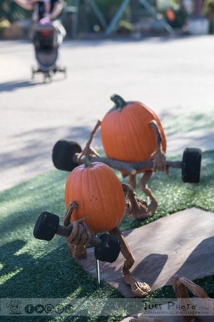 Pumpkins-3459