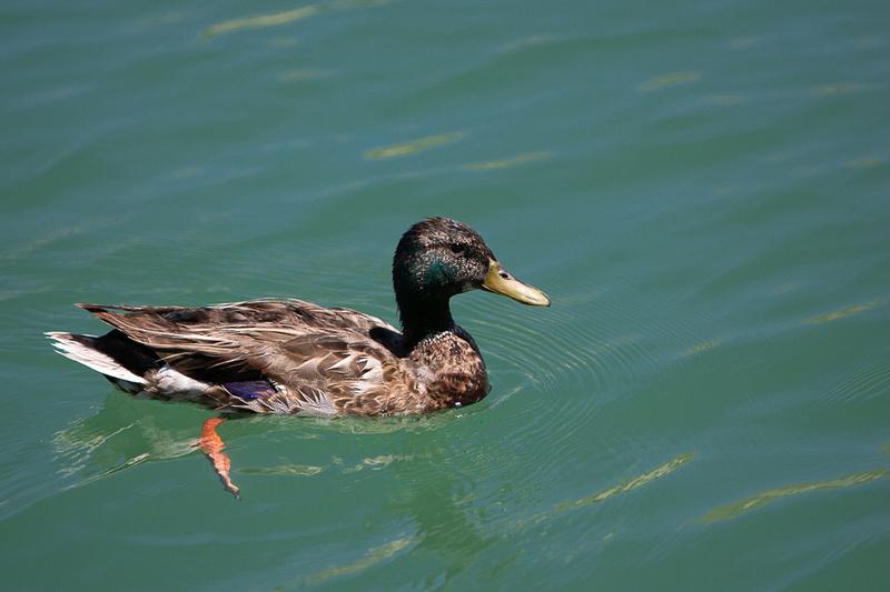 Lake_Pleasant-9385