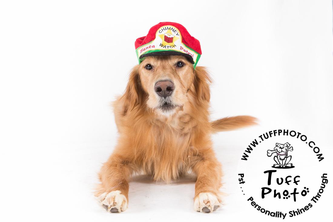 Pups Holiday-150