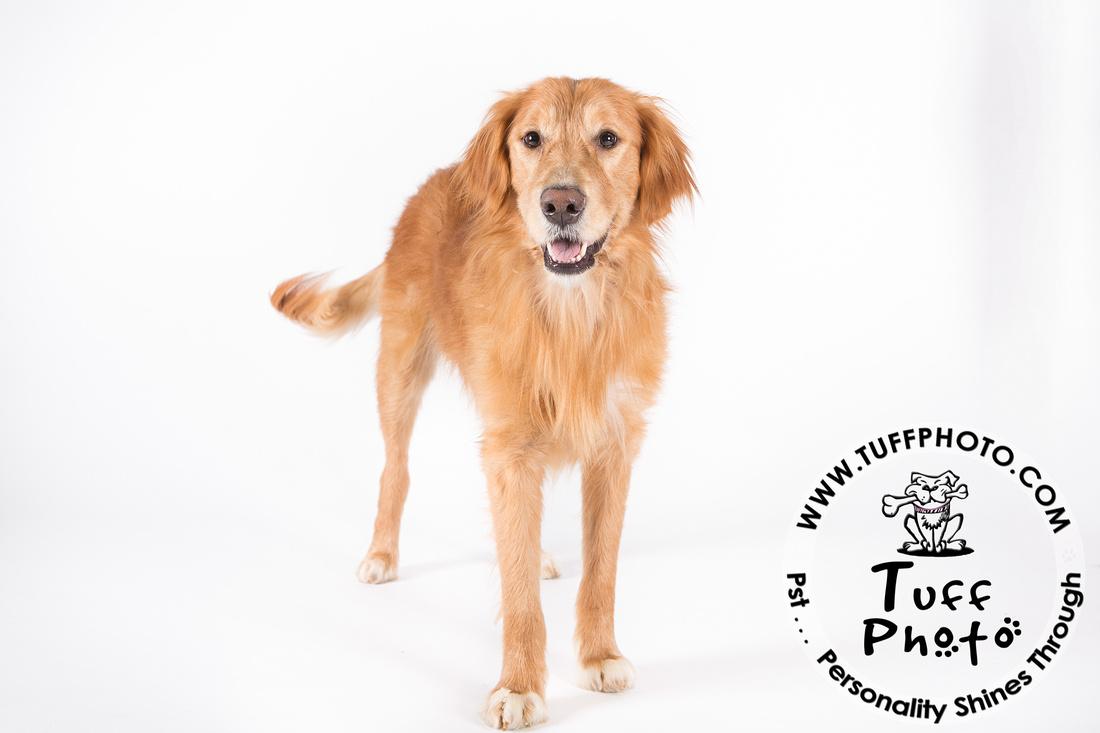 Pups Holiday-024