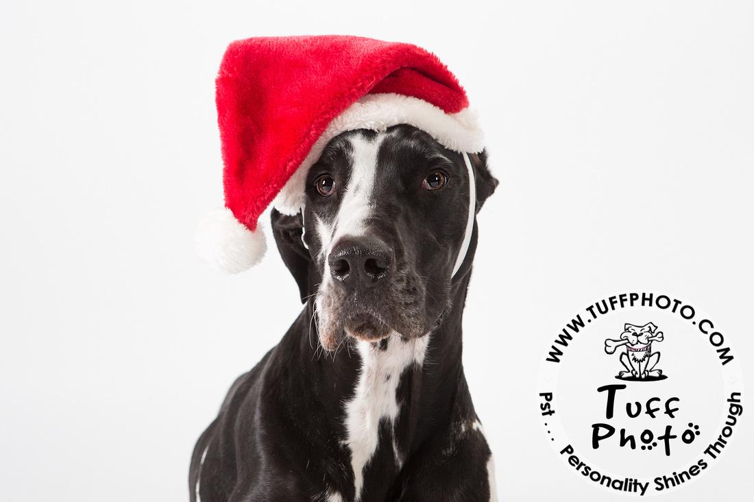 Pups Holiday-138