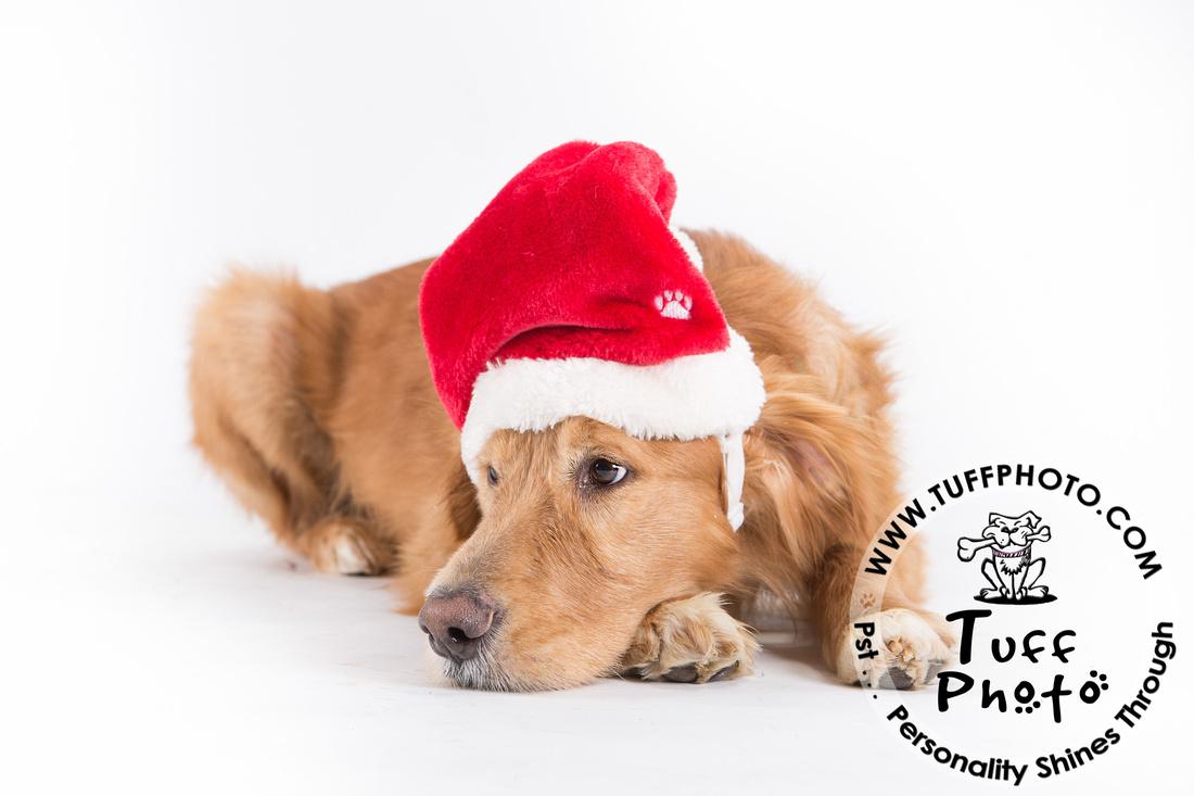 Pups Holiday-158