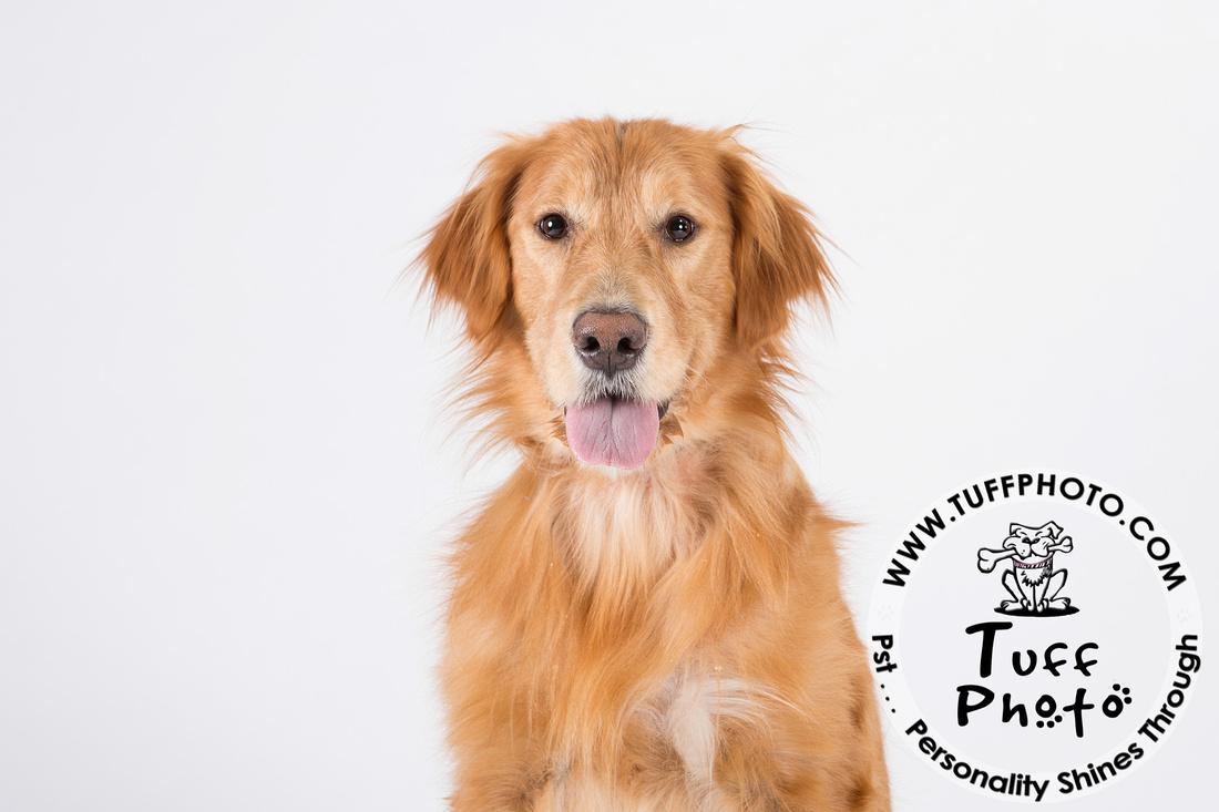 Pups Holiday-029