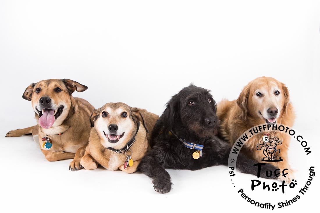 Pups Holiday-6565