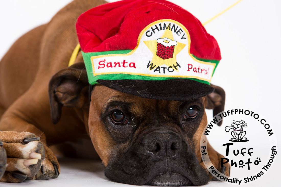 Pups Holiday-114
