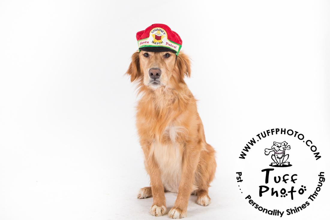 Pups Holiday-152
