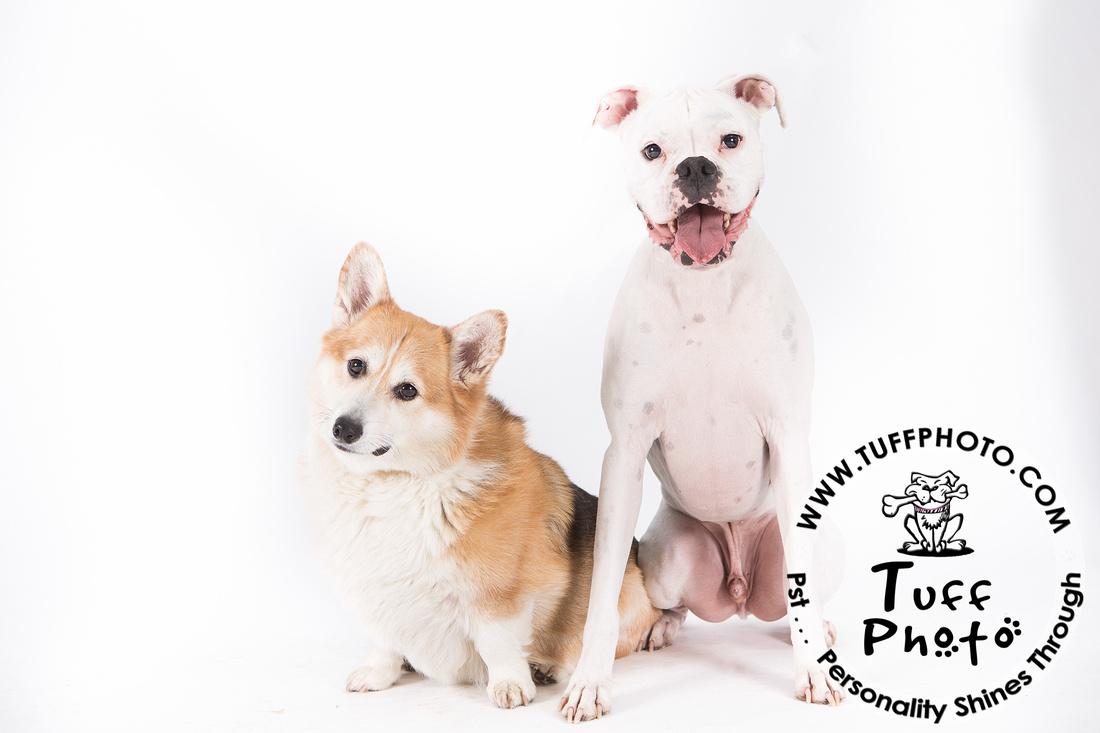 Pups Holiday-122