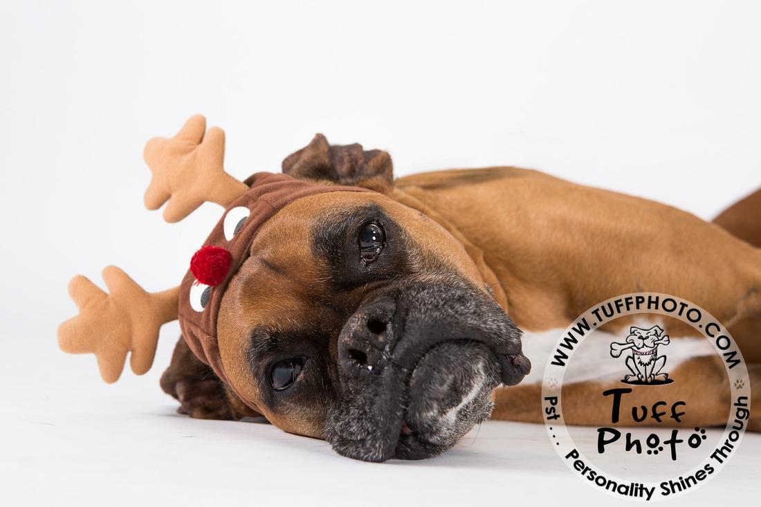 Pups Holiday-113