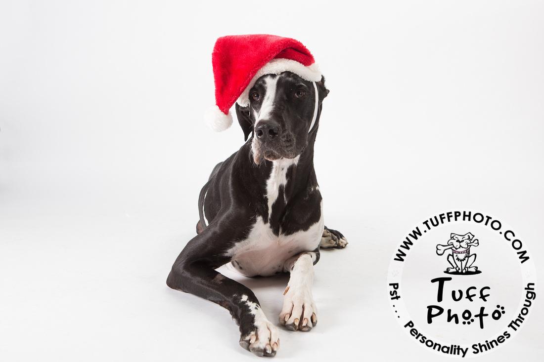 Pups Holiday-137