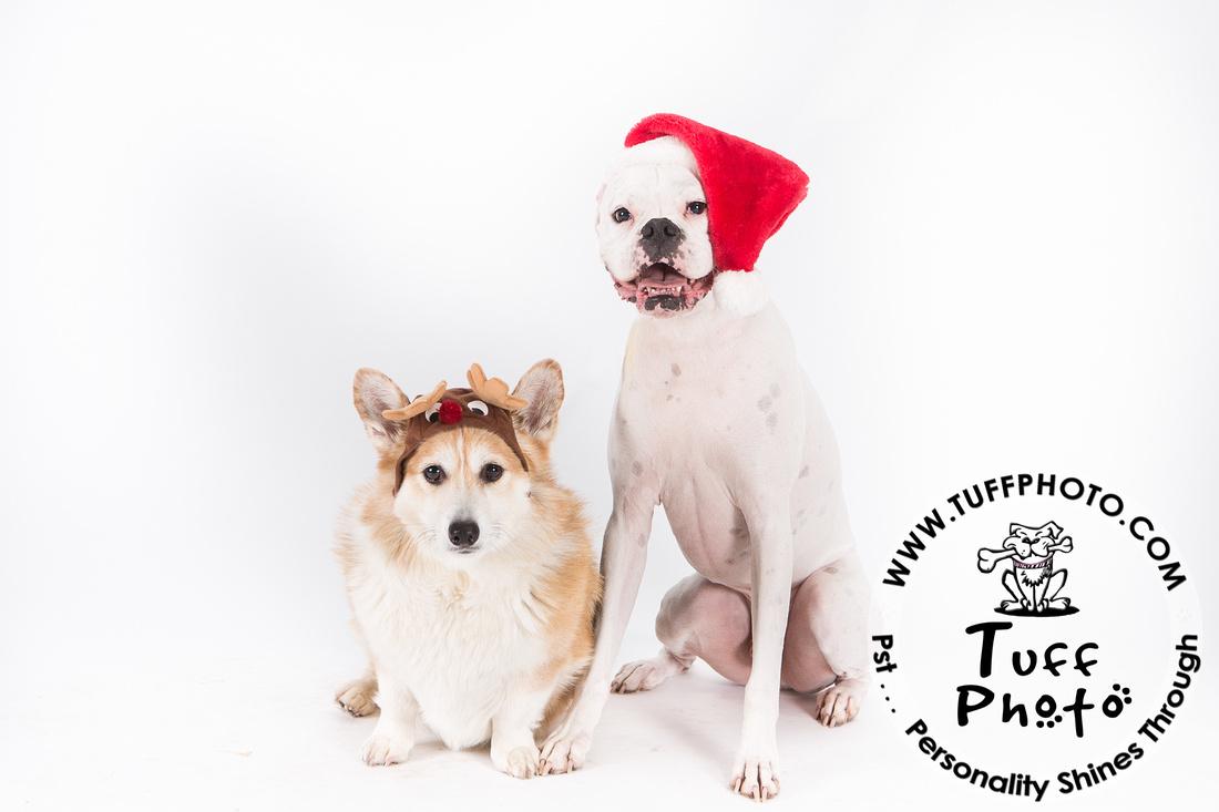 Pups Holiday-129