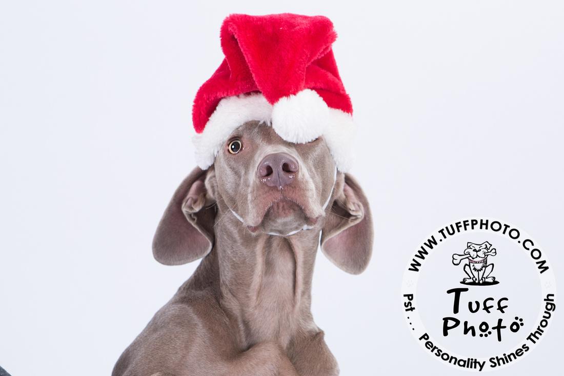 Pups Holiday-149
