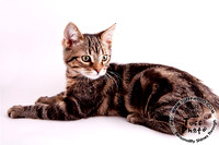 Hunter_Cat-1005