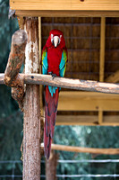 indiancreekzoo-5921