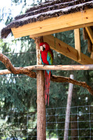 indiancreekzoo-5923
