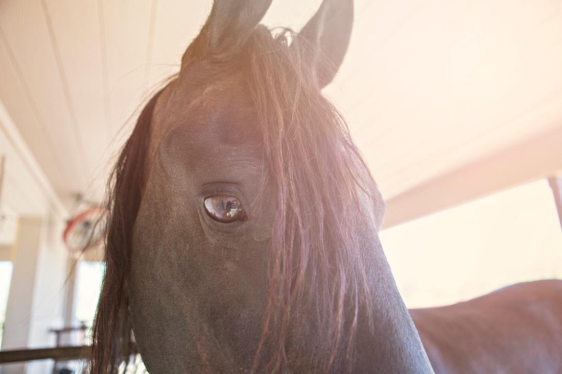 Jollypets_horse-1013sun